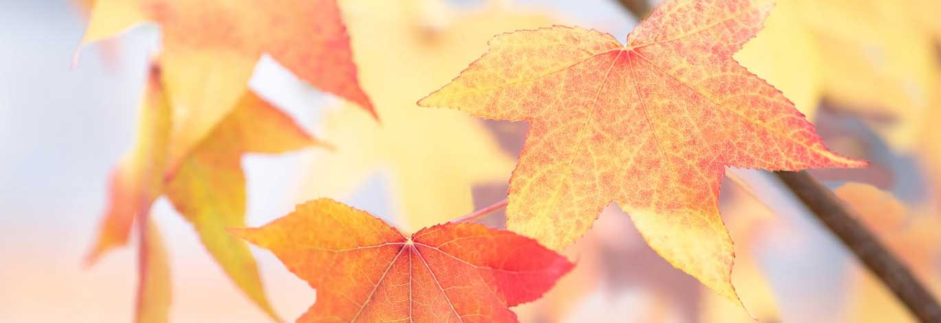 herfst-website-header.jpg |
