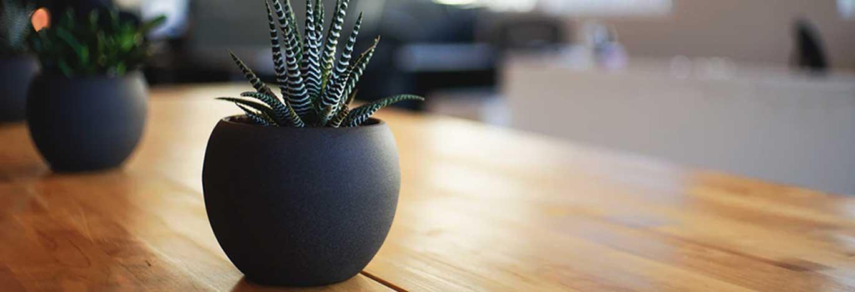 plant-op-bruin-bureau.jpg | Blijmeter resultaten Q1 & Q2