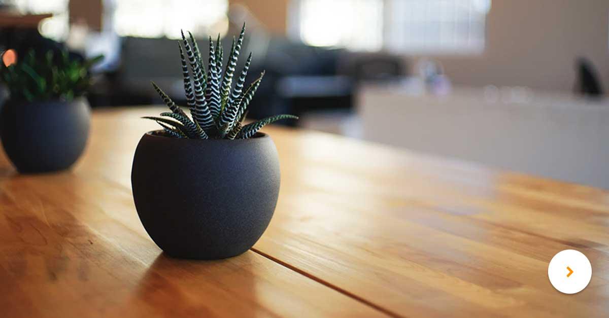 plant-op-bureau.jpg | Hittegolf op kantoor?